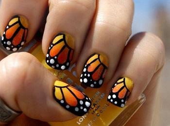 Изображение крыла бабочки