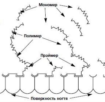 Схема работы праймера