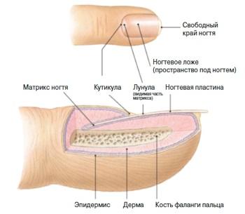 Методы удаления кутикулы